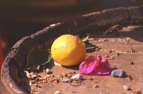 Zitrone-auf-Fass-97.30
