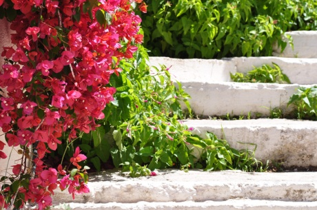 Treppe.-Kreta-1153