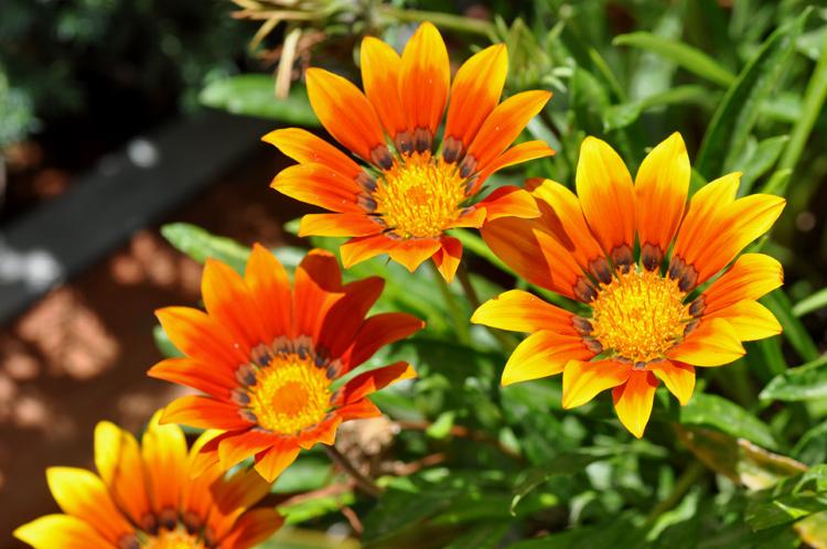 Blumen-Kreta-1614