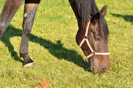 Pferd-Tiere-4048