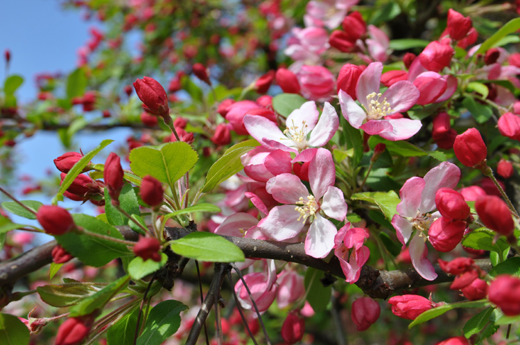Fr-Blütenzweig.-0668
