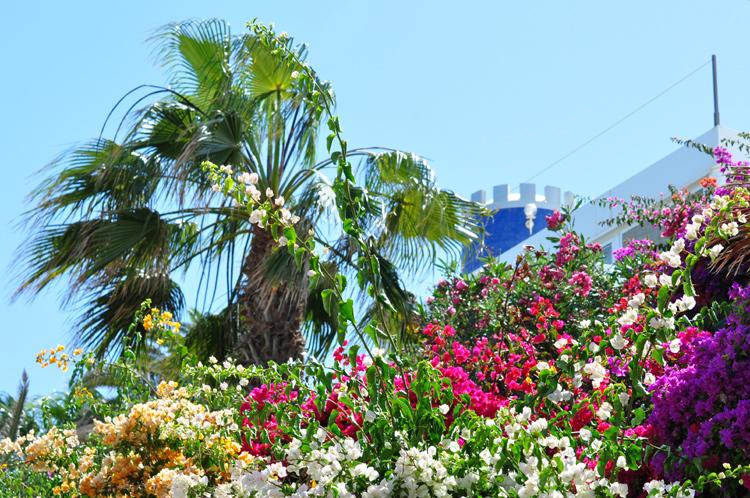 Blumen,-Turm-Fuerte-2734