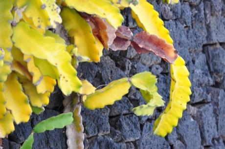 Pflanze-Lanz-DSC_4648