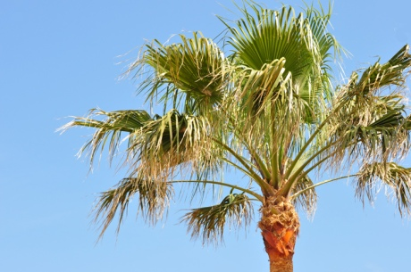 Palme-Menorca-9407