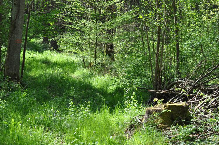 Wald-2014-4-.5219