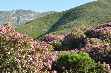Berge-Blumen.-Kreta-2014.63