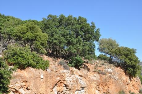 Felswand-Bäume.-Kretea-2012