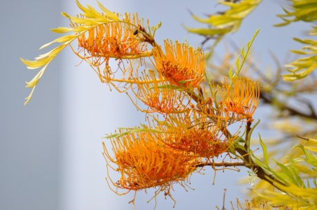 Pflanze-Kreta-2014.6603