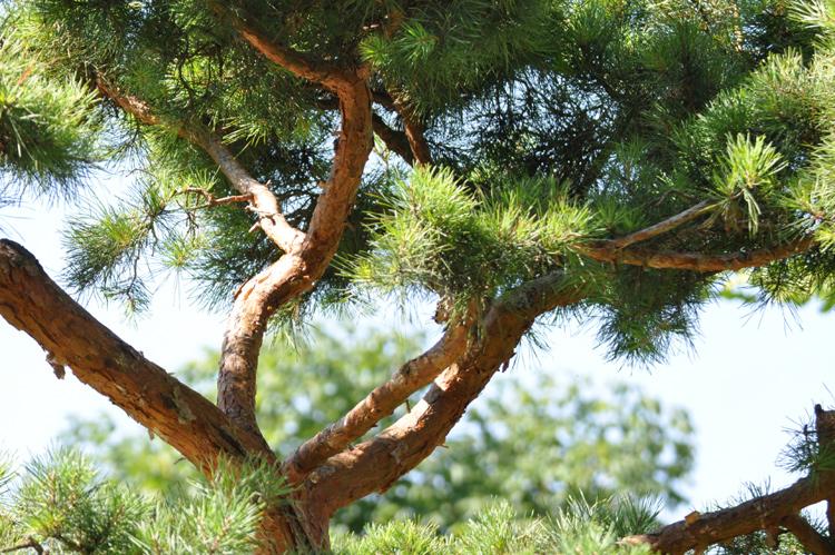 Baum.2013-08.4279
