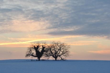 Baeume-im-Schnee-2010-12.47