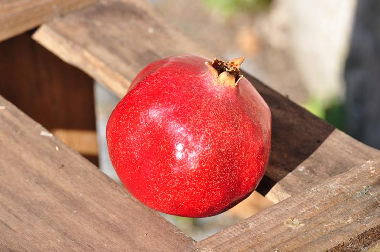 Granatapfel-Obst.2178