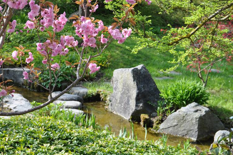 Biet.Mot.-Japangarten-647