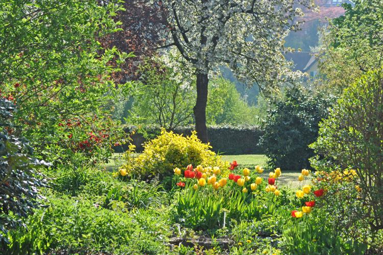 Garten-2015-04.-8656