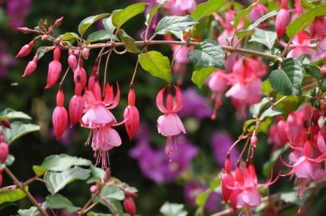 Blumen-2015-05.-8808