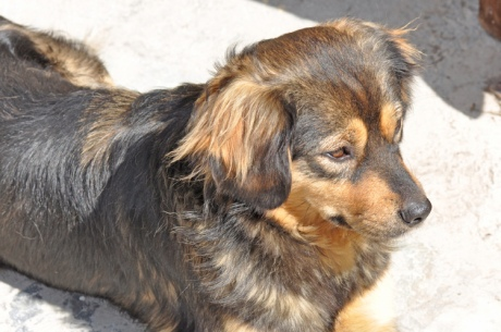 Hund-Kreta-2010.-1680