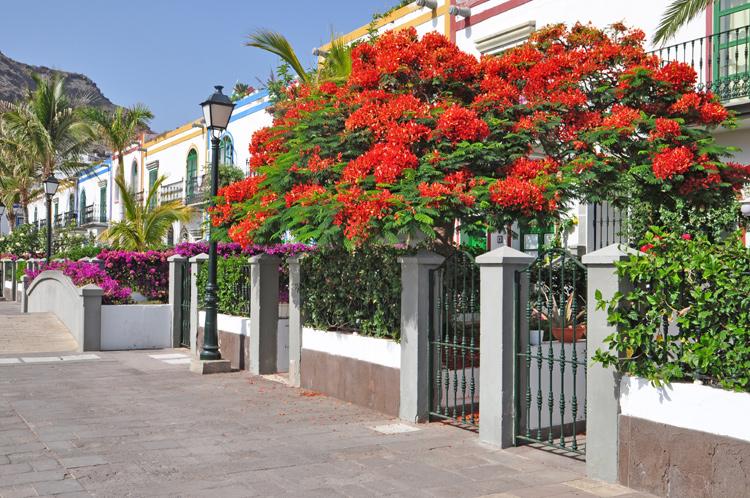 Haeuserreihe-Gran-Canaria-7