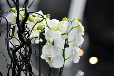 Orchideen.-Photok.3660
