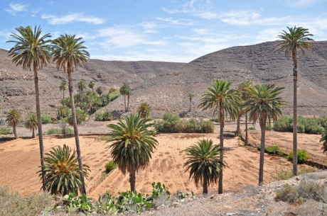 Oase.-Fuerteventura.-3765