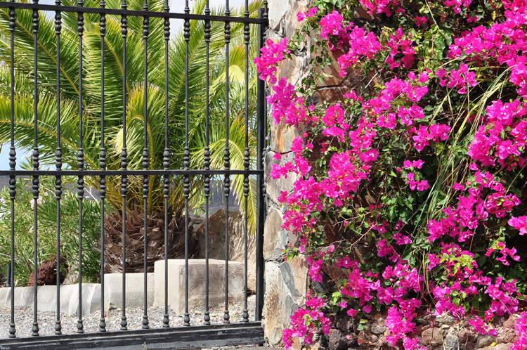Tor-und-Blumen-Gran-Canaria