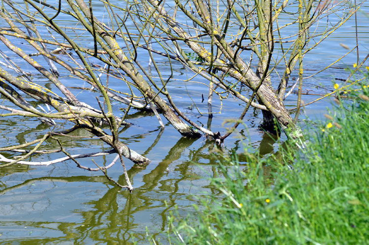 zweige-im-fluss-2011-05-55