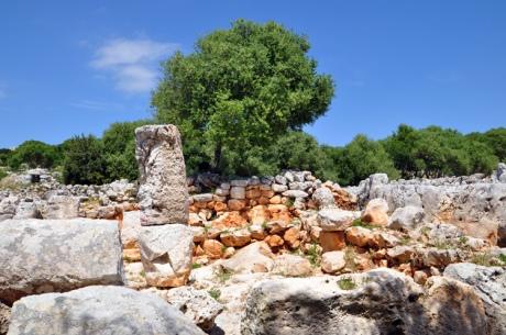 ruinen-baeume-menorca-9681