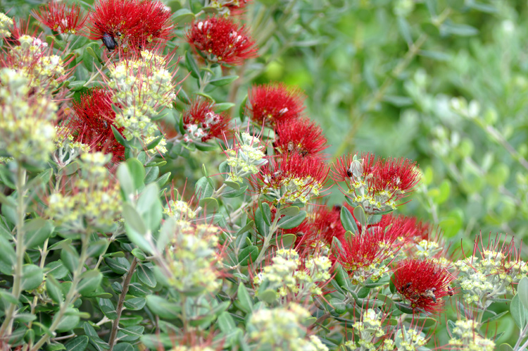 rote-pflanzen-kreta-21010