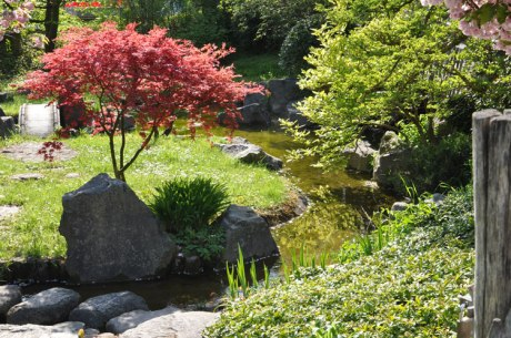 Japangarten.-5156
