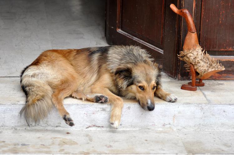 Hund,-DSC_1472.jpg