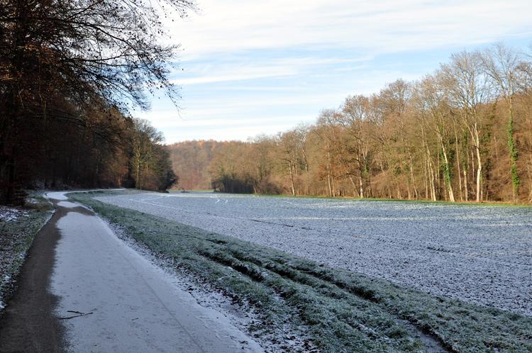 Weg-Feld-2010-11.4316.jpg