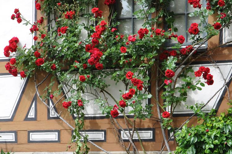 Bietigheim-Rosen-am-Rathaus.jpg
