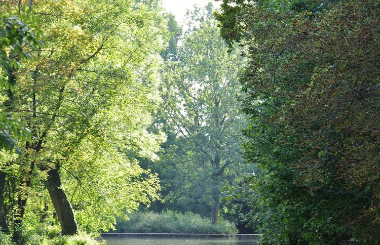 Baeume-Wasser-2011-08.-8162