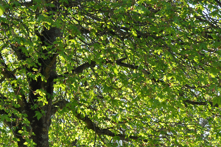 Baum-mit-Zweigen-2018-04.-2