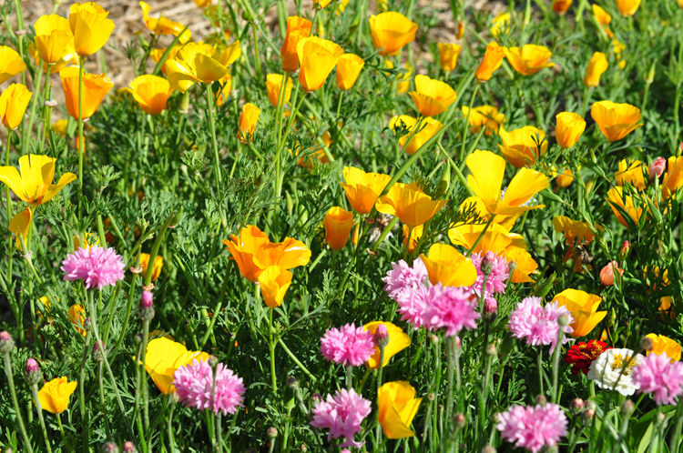 Gelbe-Blumen-2010-07.7740
