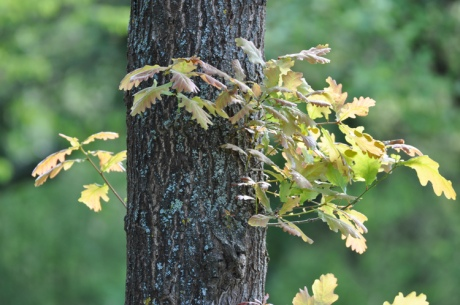 Baum.Sproesslinge.-DSC_2234.jpg