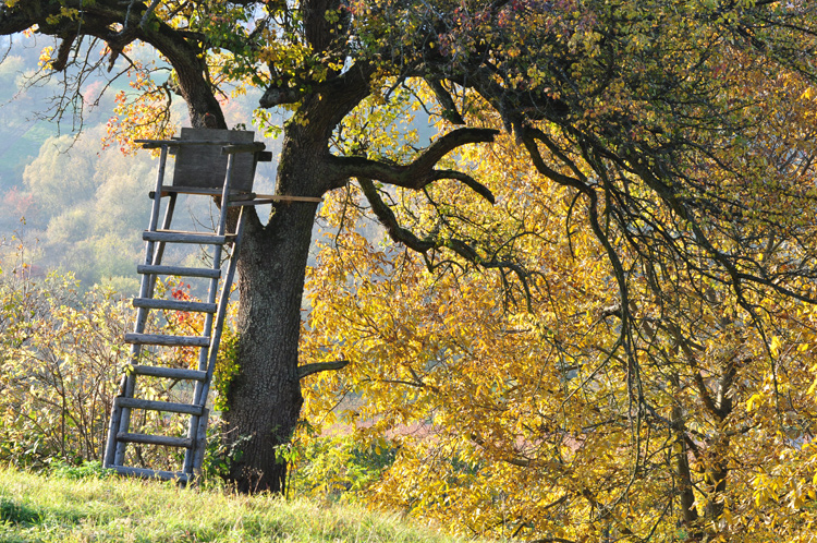 Herbstbaum-Jaegerstand-2011