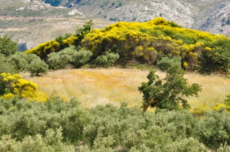 Ginsterlandschaft-Kreta-201.jpg