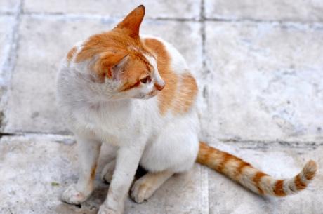 Katze-Kreta-2010.1497