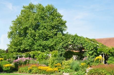 Baum-im-Buergerpark.7821-Ko