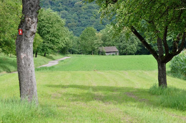 Baeume.-Feld-2011-07.7610
