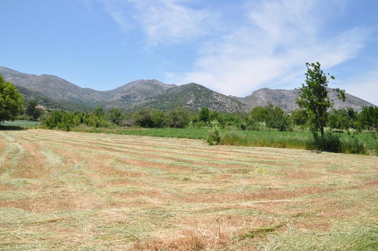 Felder-Berge-Kreta-2014.567