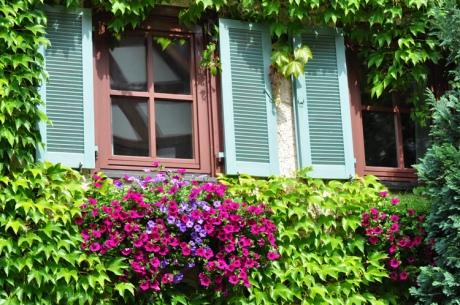 Umrankte-Fenster-2011-07.76