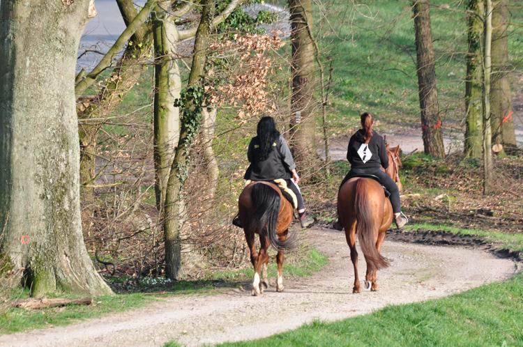 Zwei-Pferde-2020-04.4743