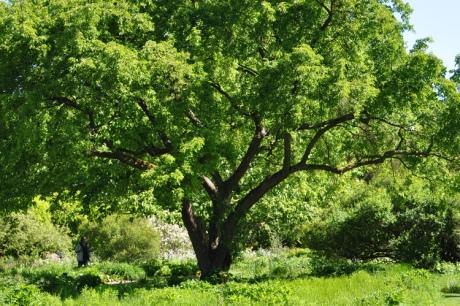 Baum-2020-05.5099