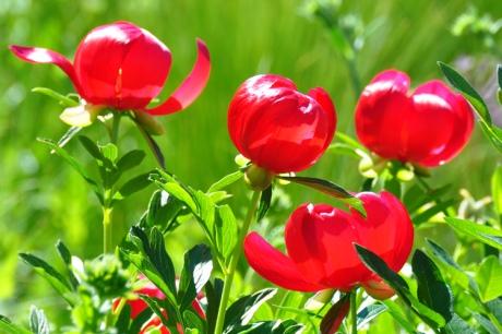 Rote-Blumen-2020-05.5080