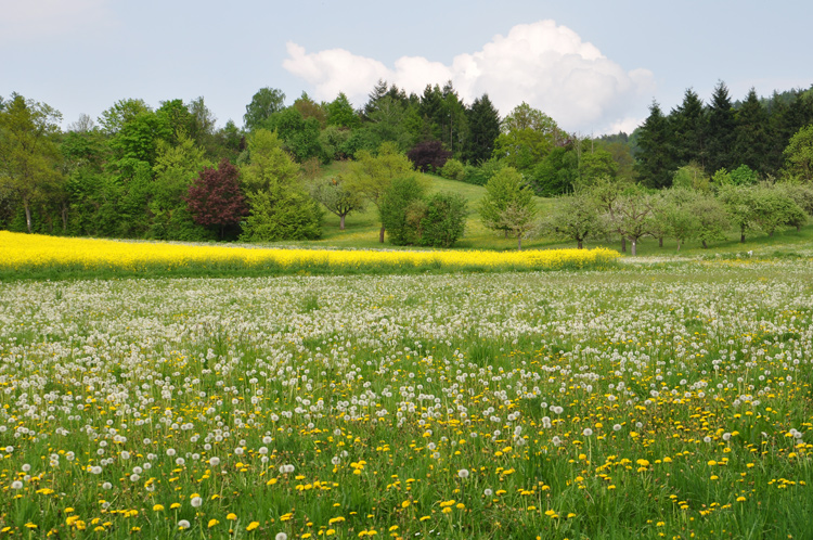 Wiese-Wald-2010-05.791